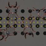myrthevdheijkant-grote-kevers-rood-zwart-stippen-zwart-geel