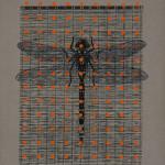 myrthevdheijkant-libelle-zwart-stippen-oranje-op-zand