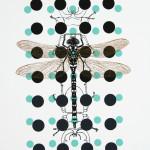 myrthevdheijkant4823-libelle-zwart-vleugels-bruin-kevers-stippen